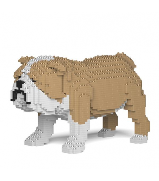 English Bulldog JECKA